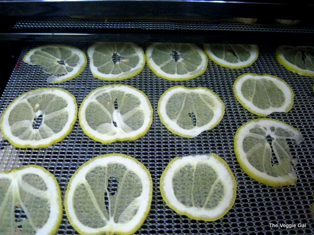 Dehydrating Meyer Lemons