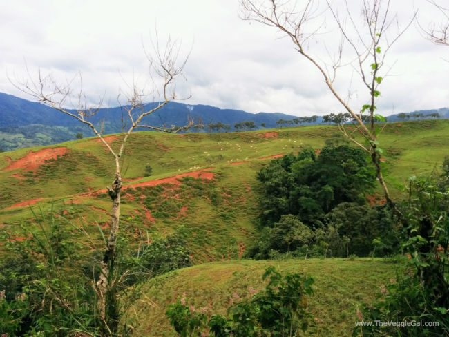 Hills of Platanillo Costa Rica