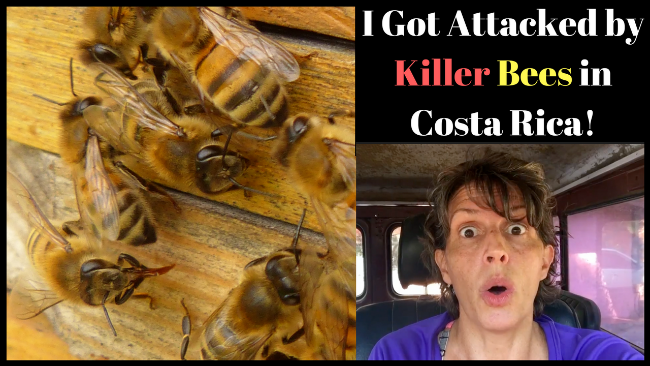 I Got Attacked by Killer Bees in Costa Rica!
